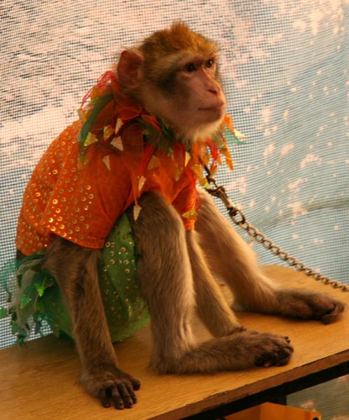 1 monkey - SSC ~SD Circus~
